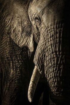 Stunning Finalists of 2017 Wildlife Photographer of the Year Competition #inspiration #photography