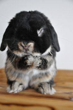 """Dear God.... Why did you have to make me so darn cute!? Im ALWAYS being kissed on and hugged on!? Why!?"" lol :-) cute lil bunny :-)"