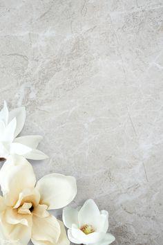 White Flower Background, Theme Background, Flower Background Wallpaper, Flower Phone Wallpaper, Flower Backgrounds, Background Patterns, Magnolia Wallpaper, Framed Wallpaper, Phone Wallpaper Images