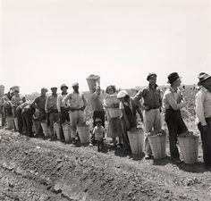 Migrant Pea Pickers near Westley, CA