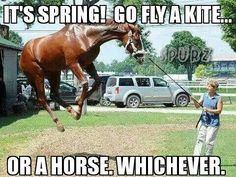 Horse Kite by - A Member of the Internet's Largest Humor Community Funny Horse Memes, Funny Horse Pictures, Funny Animal Jokes, Funny Horses, Cute Horses, Horse Love, Cute Funny Animals, Pretty Horses, Animal Memes