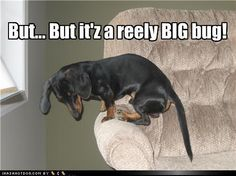 The only comparison between girls and dogs.... fear of really BIG bugs!!! LOL
