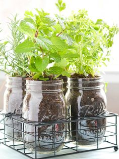 Need DIY garden projects and ideas to decorate your home outdoor? Find 101 DIY garden projects made with recycled materiel to upgrade your garden at no cost. Mason Jar Herbs, Mason Jar Herb Garden, Diy Herb Garden, Mason Jar Diy, Garden Fun, Pots Mason, Gravel Garden, Herbs Garden, Terrace Garden