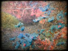 Surreal Wildflower Gathering Blue 8x10 Photograph