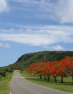 Still love the flame trees! Saipan - Northern Mariana Islands, Micronesia
