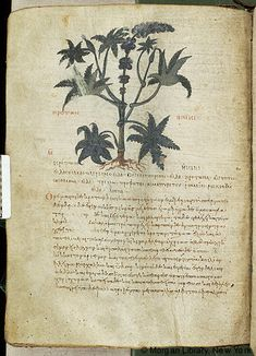 De materia medica, MS M.652 fol. 86v - Images from Medieval and Renaissance Manuscripts - The Morgan Library & Museum
