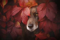 Soulful Portraits Of Dogs Enjoying The Magic Of Autumn By Anne Geier