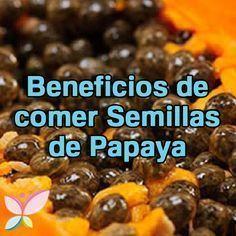 Protegen el riñón El consumo de semillas de papaya ayuda a prevenir problemas de insuficiencia renal y también sirven para el tratamiento cuando ya se padece este problema. Para este caso en especial es recomendado masticar 7 semillas de papaya 7 veces al día. Ayudan a depurar el hígado El hígado es uno de los órganos más importantes de nuestro cuerpo, pues su función es filtrar las toxinas y sustancias tóxicas para prevenir muchas enfermedades.