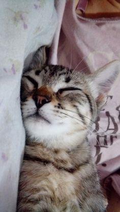 She really sleeps a lot!! My little sheetara