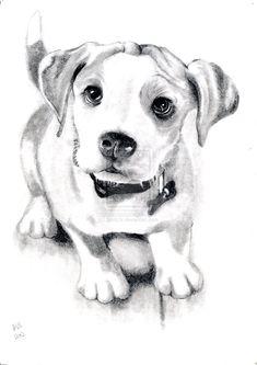 Dog Sketch by Spritz3r.deviantart.com on @deviantART