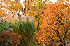 10 Things to Plant This Fall Fill your fall garden with grass, evergreens, annuals and spring bulbs. Most Beautiful Gardens, Unique Gardens, Chicago Botanic Garden, Growing Gardens, Garden Bulbs, Spring Bulbs, Fall Plants, Autumn Garden, Garden Planning