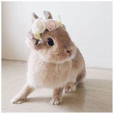 #Flower #Flowers #Crown #FlowerCrown #Bunny #Rabbit #Animals #Cute #SoCute