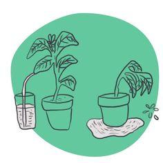 Arroser sans gaspiller d'eau au potager sur balcon - Mon petit balcon Green Life, France, Illustrations, Drawings, Illustration, Illustrators, French