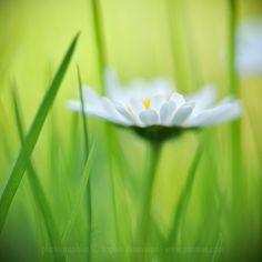 daisy- so sweet!