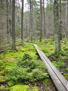 Travel pages about Tyresta National Park in Sweden. Photos, tourist information, travel stories. Hiking Places, Places To Travel, Places To See, Oslo, Sweden Places To Visit, Baltic Cruise, House In Nature, Beach Properties, Sweden Travel