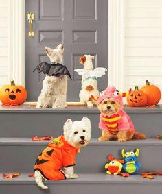 #halloween #decor #family #pets #costumes  http://diybazaar.ro/halloween-35-de-costume-pentru-animale-de-companie/