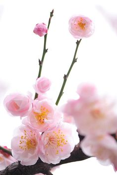 c'mon spring! photo by *Sakura* on flickr.