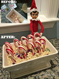 Talk about some serious magic! Here& how to set up a Magic Candy Cane Christmas Garden for your Elf on the Shelf. The kids won& believe their eyes! Christmas Garden, Christmas Elf, Christmas Humor, Christmas Ideas, Christmas Decorations, Christmas Parties, Christmas 2017, Elf On The Self, The Elf