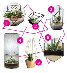 DESIGN TRENDS | GEOMETRIC TERRARIUMS on HIBRID
