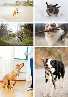 Jack as a stuntdog - and a round up of the cutest freaking pups EVER.