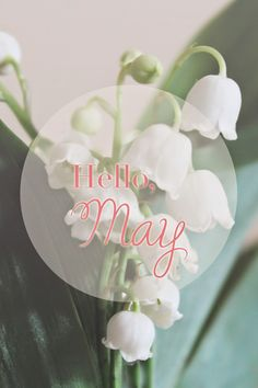 Hello, May Lily of the Valley via Morgane LB: 05/2014