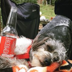 Grab a bottle and rest your paws, you earned it!  #mondays #treatyoself #boochpooch #raspberryginger : @bee_free_lovin_life