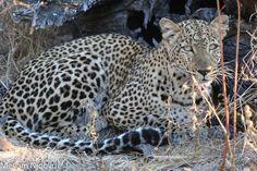 Animals, National Forest, Africa, Animales, Animaux, Animal, Animais