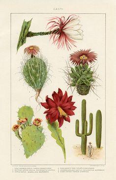 1. Night blooming cereus; 2. Whipple's spring cactus; 3. Nipple cactus; 4. Engelmann's opuntia; 5. Ackermann's left cactus; 6. Giant cactus.