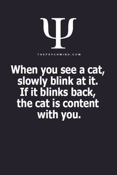When you see a cat, slowly blink at it. If it blinks back, the cat is content with you
