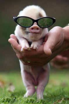 Para disfrutar del verano con gafas de sol