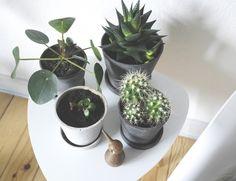 Hay urtepotte skjulere Planter - Kaktusser - succulenter