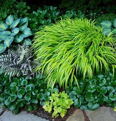 Hakonechloa macra All Gold, asarum, gold heuchera, Japanese painted fern, hosta