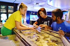 Our Touch Tank isn't just for kids! Come to The Pier Aquarium to learn more about our animals!