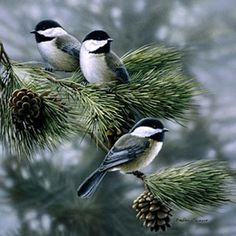 Chickadees...these birds weather the harsh Canadian winter cold...and cheer us up as they gather at birdfeeders. They eat berries on the trees.