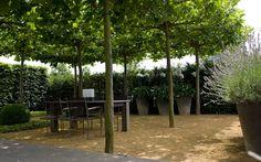 Pergola Patio Backyard - - Enclosed Pergola Attached To House - - - Pergola Terrasse Moderne
