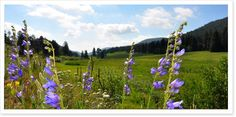 Meyer Ranch Open Space Hikes | Day Hikes Near Denver - Explore The Best Hiking in Colorado
