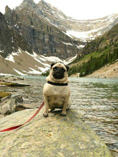 Moose enjoys a nice scenic walk through the mountains on occasion.