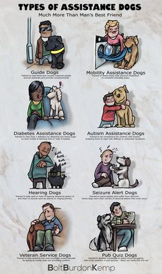Types of Assistance Dogs -We have created an infographic displaying the common types of assistance dogs and their skills in order to help raise awareness of how a trained dog can benefit the lives of many people. It also highlights how applicable an assistance dog can be to those who have experienced a serious injury and as a resul... -shared by Mediarun | published Mar 05, 2014