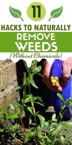 These 11 DIY weeding hacks will help you get rid of weeds. These are the best ways to get rid of weed naturally from garden. Easy hacks to clean weeds. #weedhacks #killweeds @ideastoknow Garden Weeds, Veg Garden, Vegetable Garden Design, Lawn And Garden, Garden Plants, Bucket Gardening, Gardening Hacks, Kill Weeds Naturally, Killing Weeds