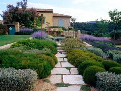 The wide joints in the pale limestone paths create patterns and allow thymes to colonize. Lavender-blue shades are virtually the only flower colors.
