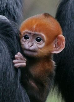 I dont usually like monkeys, but this one is kinda cute