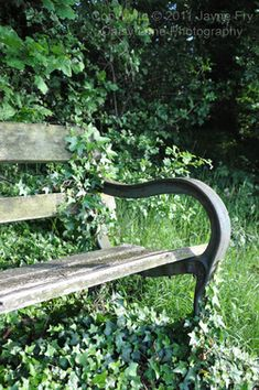 Old bench surrounded by English Ivy Moss Garden, Garden Shrubs, Gardening For Beginners, Gardening Tips, Old Benches, Park Benches, Garden Benches, Storybook Homes, Climbing Vines