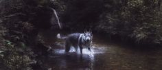 Travel with Maya - Wolfdog & I currently exploring National Park Sumava in Czech Republic
