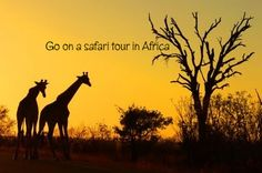 I have been wanting to go to South Africa for the longest and when I do get the chance to go, I must go on a safari. This MUST be done sometime within the next five years!