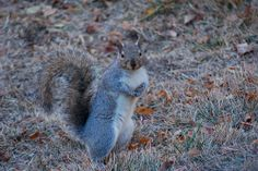 Smiling Squirrel by Out.of.Focus, via Flickr