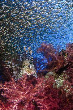 La impresionante vida marina en fotos