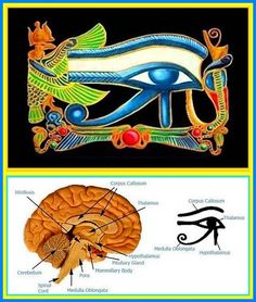"""The """"All Seeing Eye / third eye / spiritual eye. It is a gland located within the center of the human brain called the PINEAL GLAND. Through the continued spiritual practice of meditation the light from the pineal gland will continue to expand the light in the pituitary gland, as well as, the hypothalamus. DNA is activated and we return to our truth as God realized beings.This gland referred to as """"the seat of the soul"""", will remain dormant until the soul reaches a  vibrational/spiritual…"""