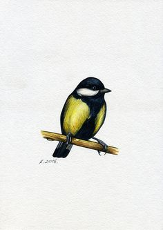 Titmouse, Tit, Watercolor Original Painting Art, Artist, Quick sketch #Realism Natalia Komisarova NatalieStorePainting You can also find me on: EBAY: http://stores.ebay.com/NatalieStorePainting ETSY: https://www.etsy.com/shop/NatalieStorePainting FACEBOOK: https://www.facebook.com/komisarova.art #NataliePaintings #NatalieStorePainting #Natalie #Artist #Birds #Watercolor