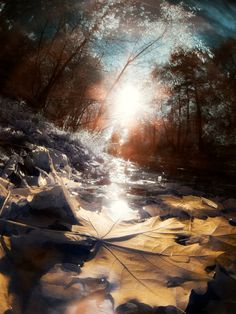 Autumn Nature Photography