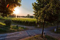"""1 strada...la luce del sole che vela le cose...la natura che dà i suoi colori: ecco un """"dipinto""""fotografato...."""